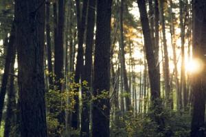 Australia Forest